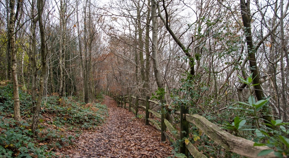 Stubbs Wood is a long, narrow stretch of woodland which sits atop the Greensand Ridge.