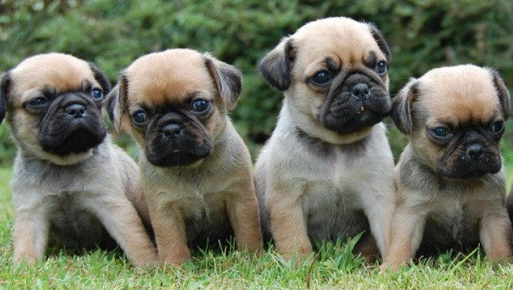 Puppy smuggler faces £3,000 bill after Trading Standards prosecution