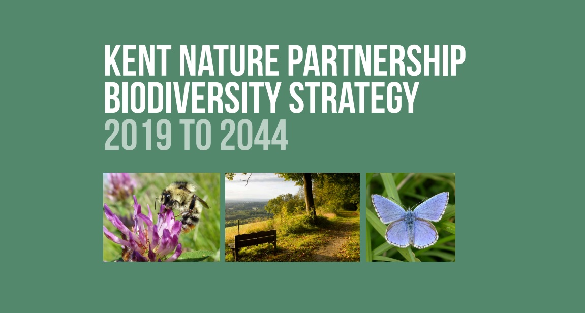 Kent Biodiversity Strategy consultation launches