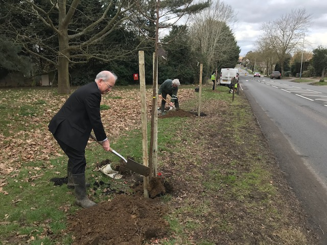 Tree planting scheme to restore Tonbridge avenue to original look from 1930s