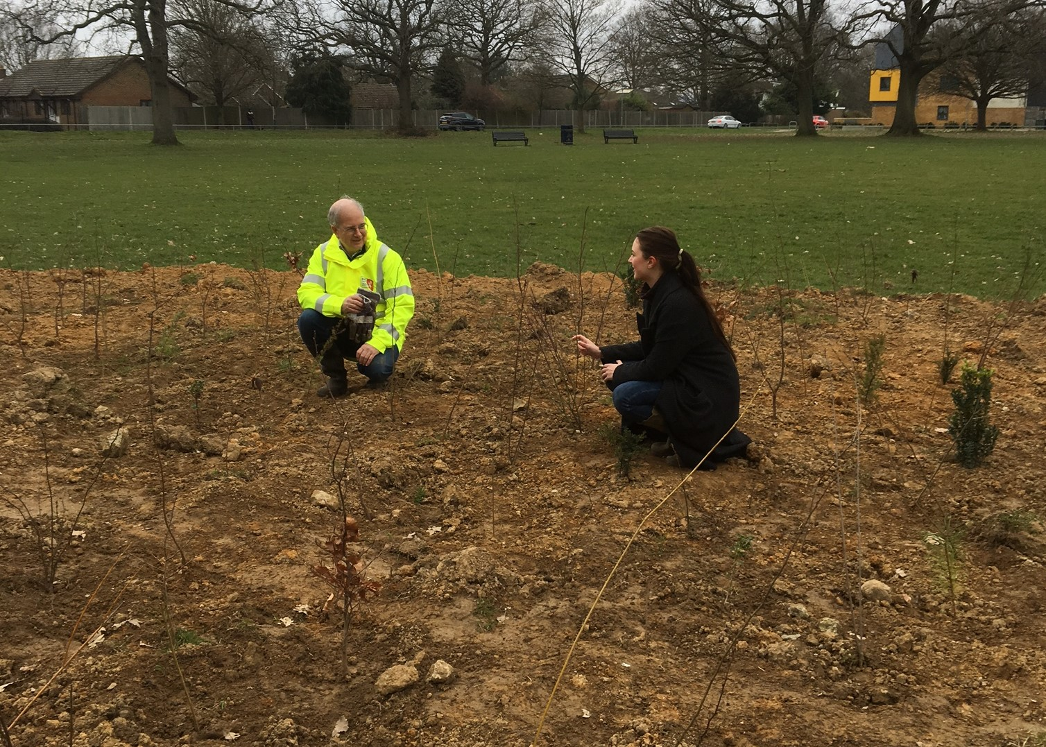 New study on tree planting could change the way UK plants trees